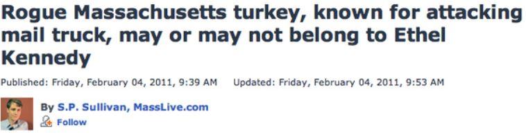 rogue turkey