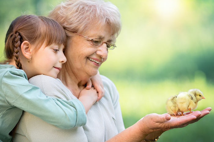 Elderly woman holding two chicks in her hand with a young girl looking on.