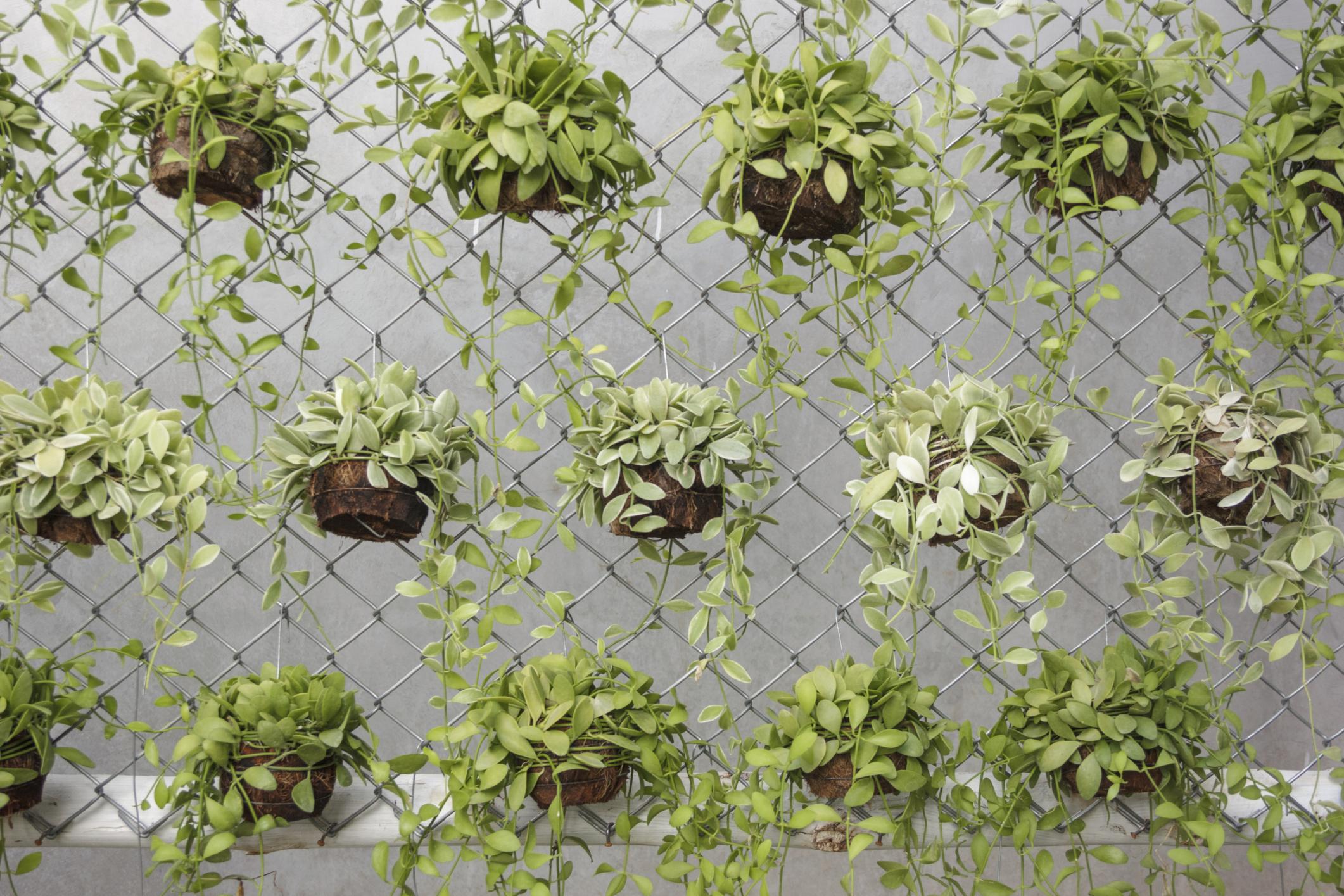 for designs garden a modern the sleek ideas best vertical homebnc and
