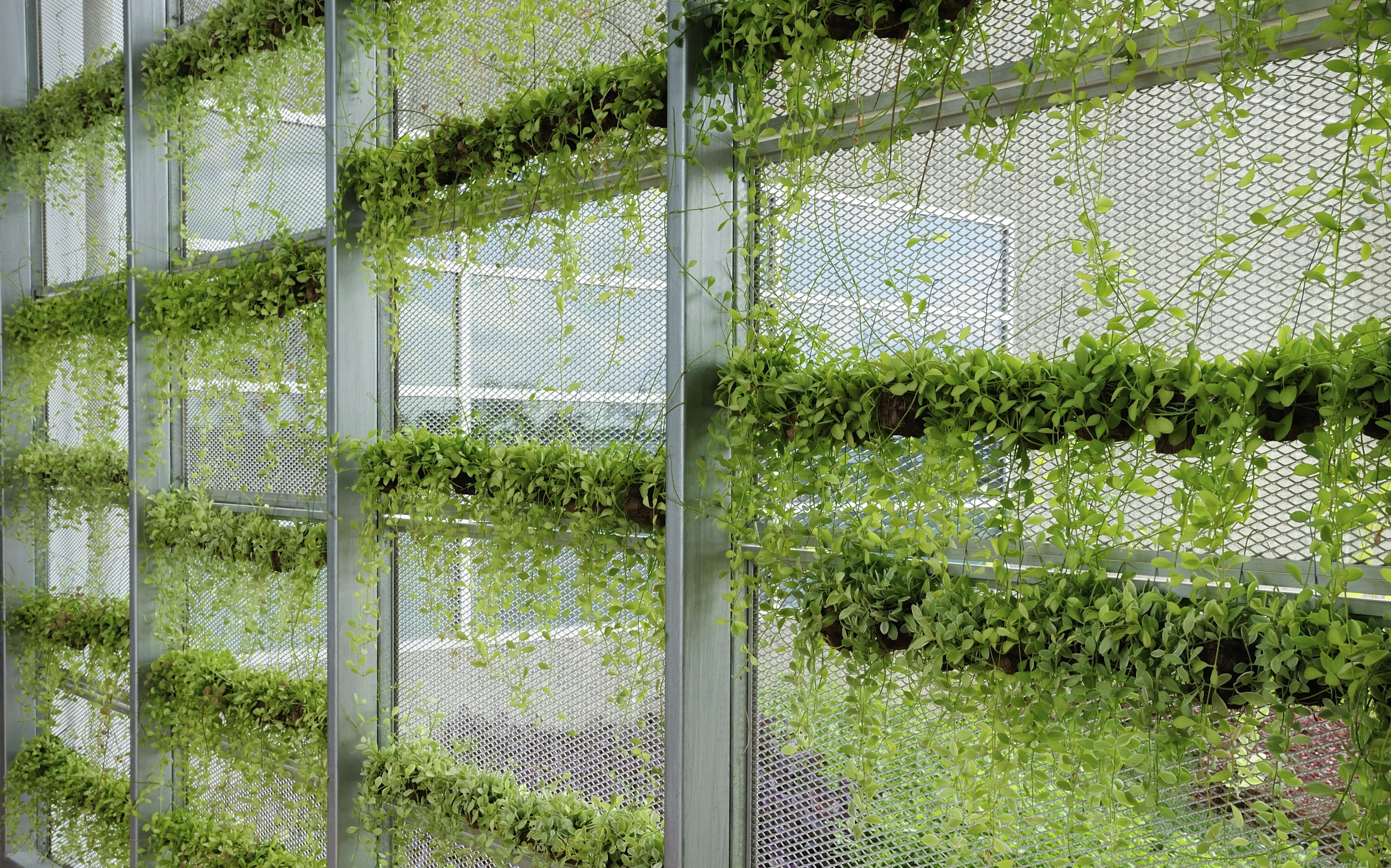 Plant Room Divider Let S Get Vertical A Primer On Vertical Gardening