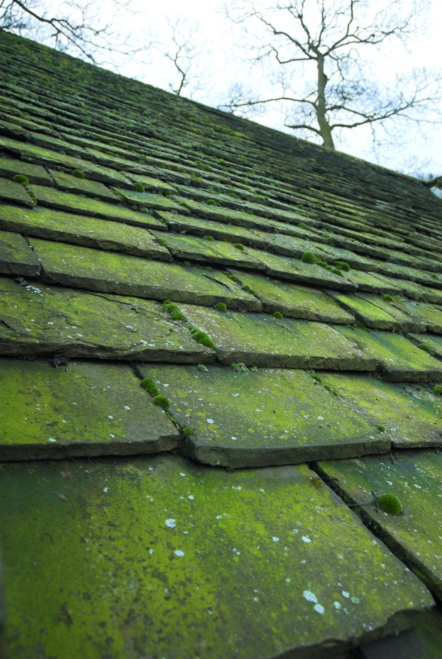 Elegant Clean Your Roof