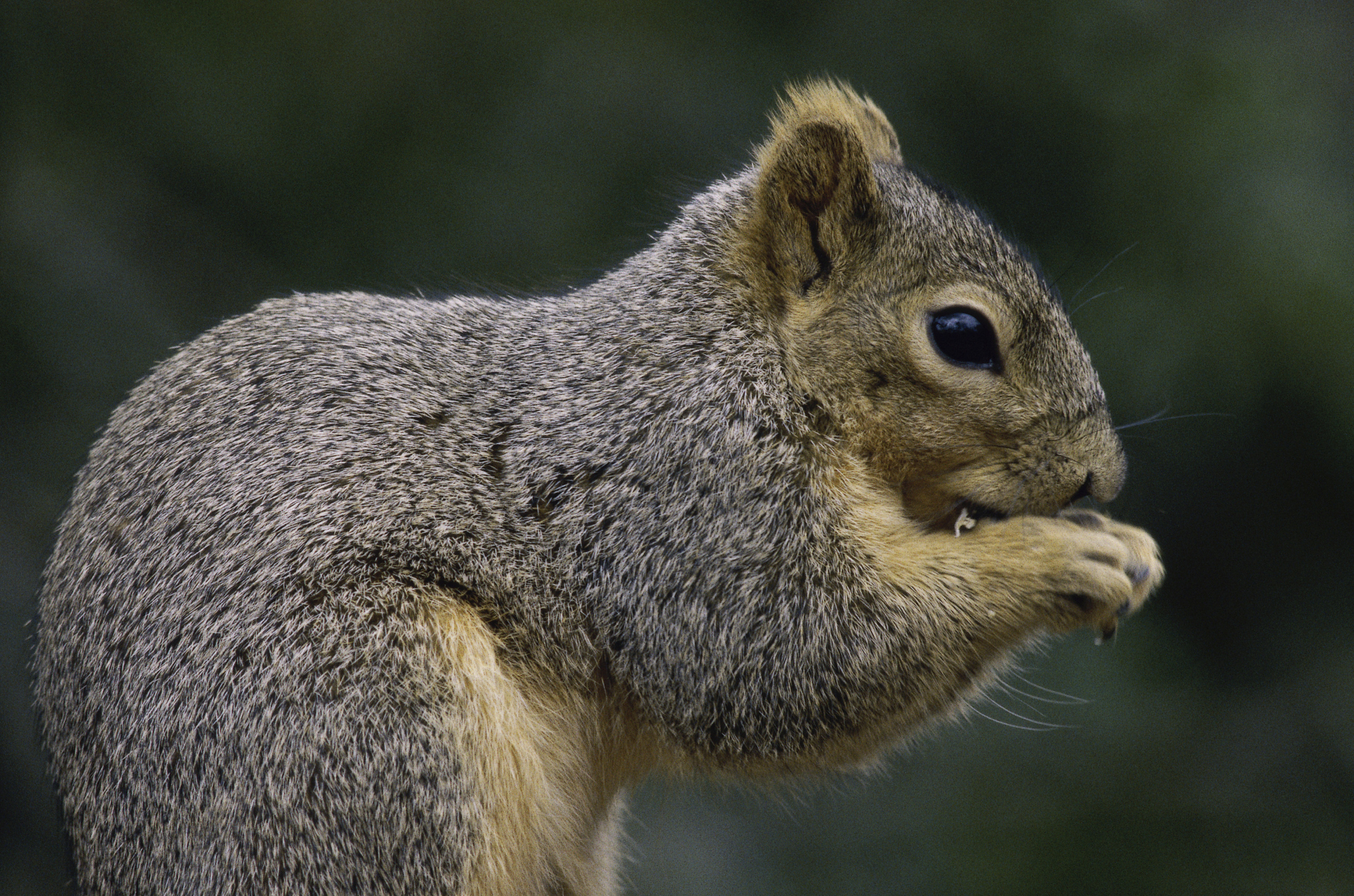 How To Handle Those Squirrelly Squirrels