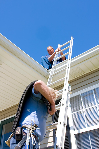 The Problems Birds Can Cause Clogged Gutters Roof Damage
