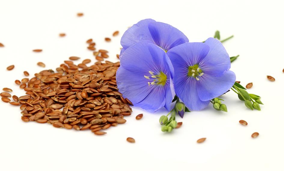 Seeds and purple flowers.