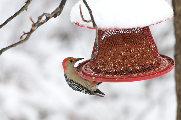 Bird at a bird feeder.