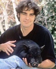 George Clooney and porcine friend in 1990