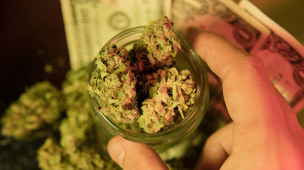 Cannabis buds in a glass jar.
