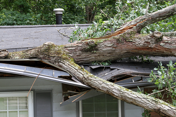 Large tree that fell on a roof.