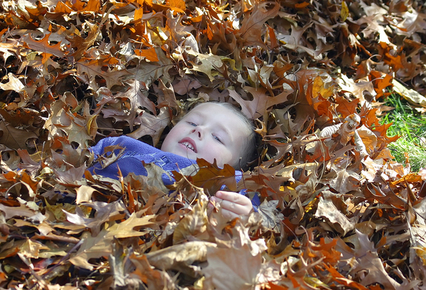 Young boy in a pile of brown and yellow leaves.