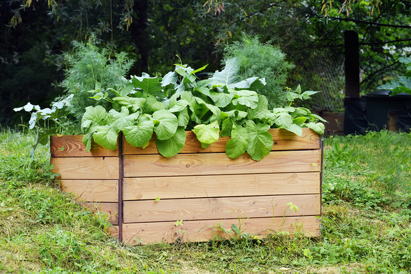 Wooden flower box filled with plants.