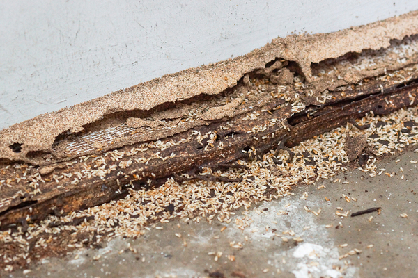 Flooring with termite damage.