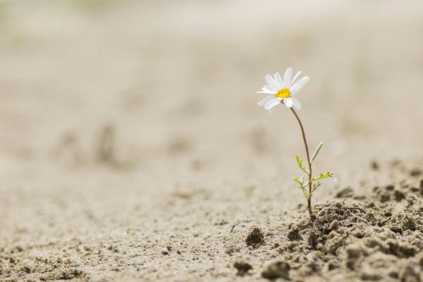 Single white flower.
