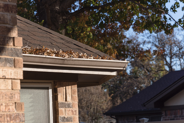 Shingled roof with white gutter filled with leaves.