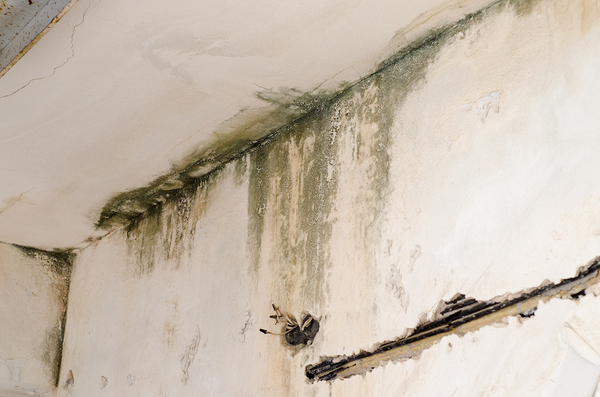Mold on a wall and ceiling.