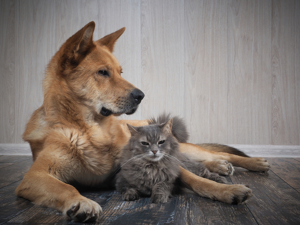 Dog and cat lying on the floor together.