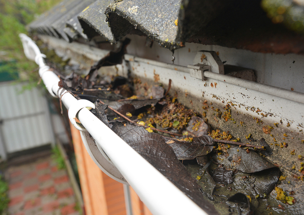 Gutters filled with wet leaves.