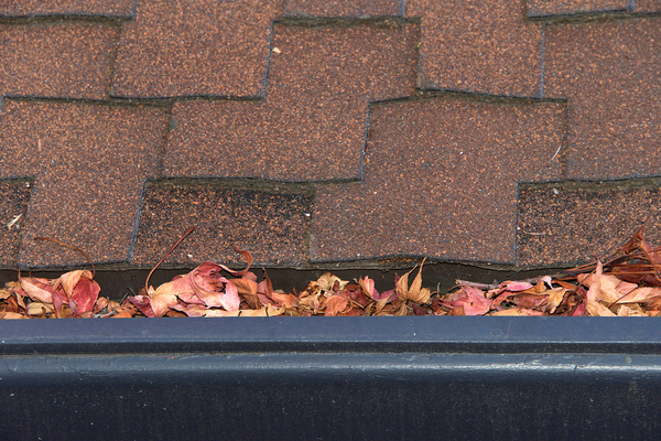 Roof tiles and a gutter filled with leaves.