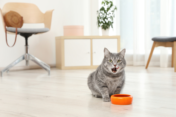 Cat eating from an orange bowl.
