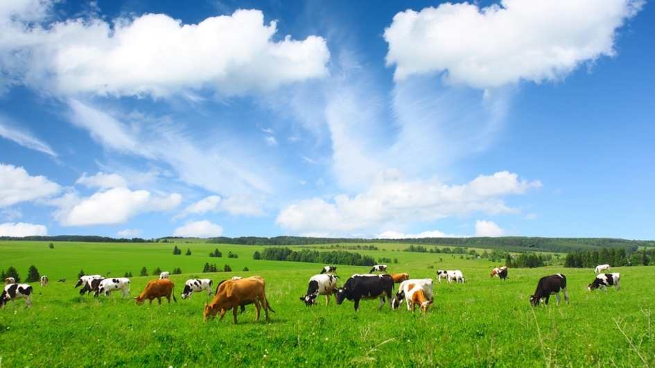 Green pasture with cows.