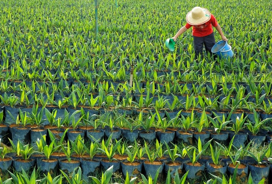 Farmer working in a field.