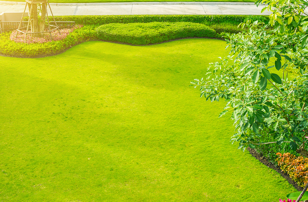 Green lawn with border shrubs.