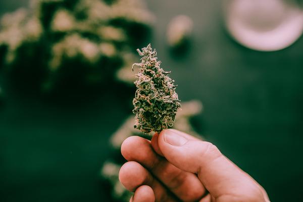 Cannabis bud.