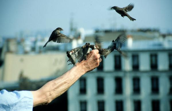 Feeding birds.