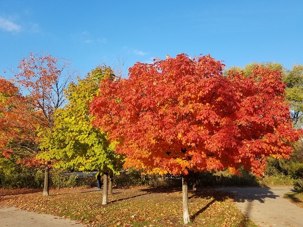 Trees with autumn colored leaves.